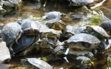 Wyspa żółwi