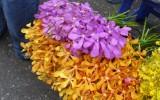 Rynek kwiatowy