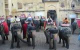 Parking dla słoni