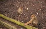 Nawet małpki czytają gazety :)